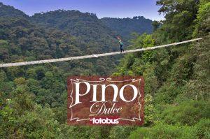 Pino Dulce Q300 Diciembre