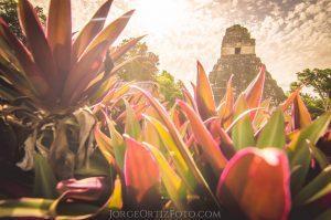 Tikal y Flores Q999 Enero